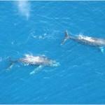 Whales in Todos Santos